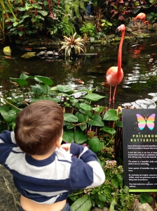 Showing off his belly button to flamingos