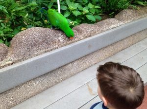 And talking to parrots.